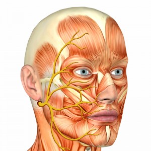 Absolutely diagram picture facial nerves think
